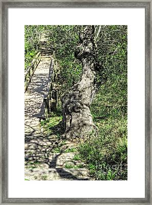 the Passageway Framed Print by Ella Kaye Dickey