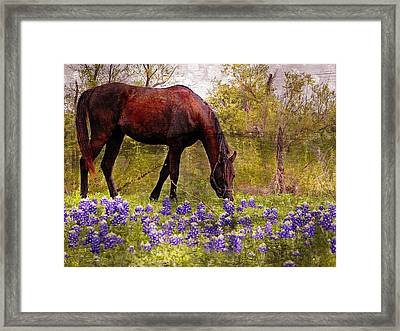 Framed Print featuring the photograph The Pasture by Kathy Churchman