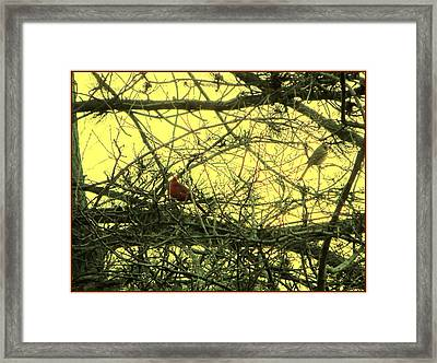 The Patch Up Framed Print by Sonali Gangane