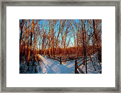 The Path Framed Print by Debbie Nobile