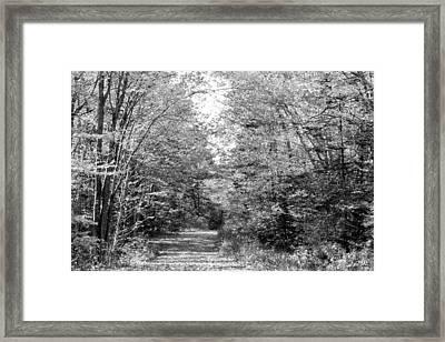 The Path Less Traveled Black And White Framed Print by Brett Pelletier