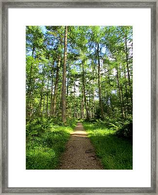 The Path Of The Righteous Man Framed Print