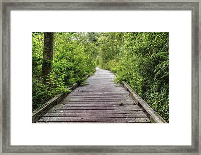 The Path Framed Print by Tim Buisman