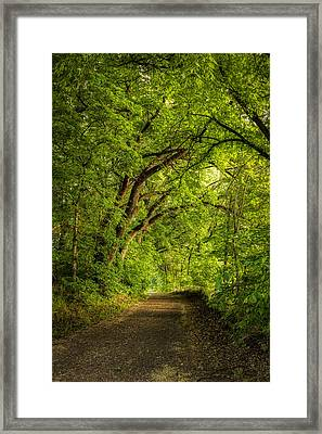 The Path To Wildcat Park Framed Print