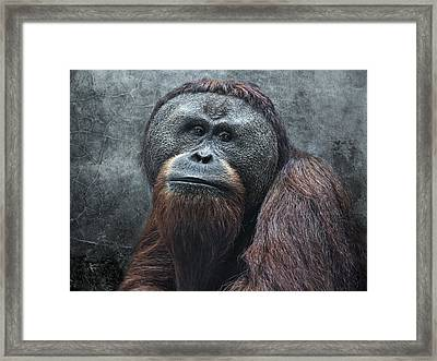 The Patriarch Framed Print by Joachim G Pinkawa