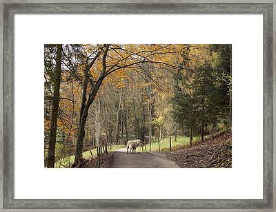 The Pause Framed Print