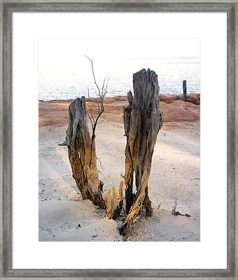 The Peace Tree Framed Print