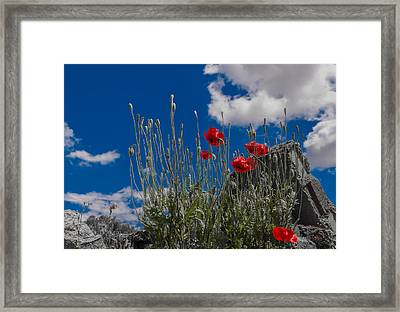 The Peace Wins Against War Framed Print