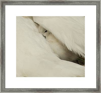 the Peak  Framed Print by Terry Cosgrave