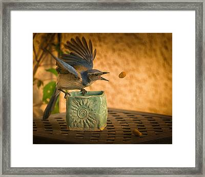 The Peanut Game Framed Print by Janis Knight