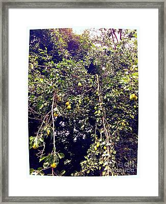 The Pear Tree Framed Print