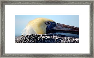 The Pelican Framed Print by AJ  Schibig