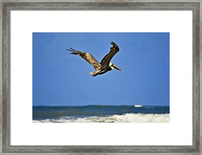 Framed Print featuring the photograph The Pelican And The Sea by DigiArt Diaries by Vicky B Fuller