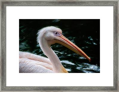The Pelican Framed Print by Hannes Cmarits