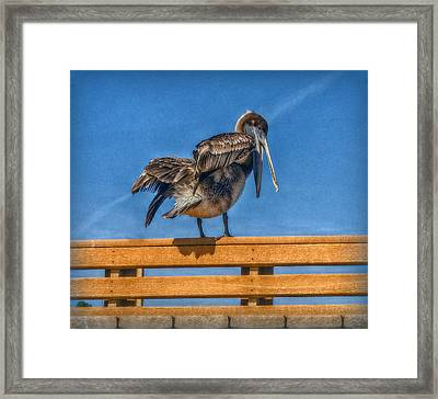 Framed Print featuring the photograph The Pelican by Hanny Heim