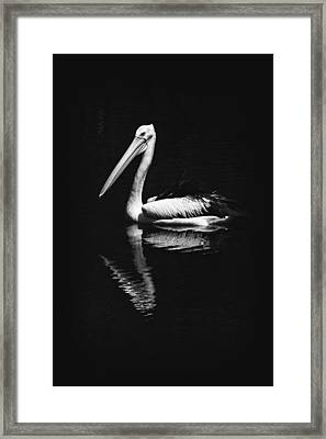 Framed Print featuring the photograph The Pelican by Zoe Ferrie