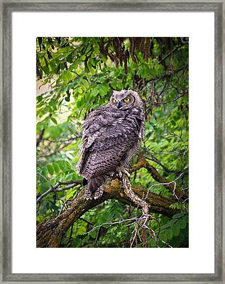 The Perch Framed Print by Steve McKinzie