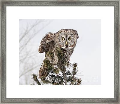 Framed Print featuring the photograph The Perching Prince by Heather King