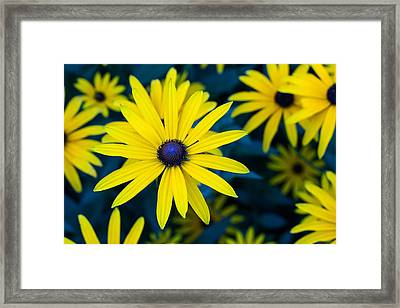 The Perennial Petal Framed Print