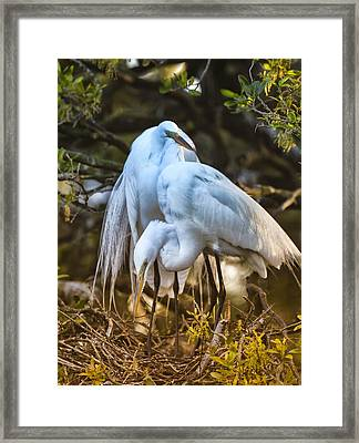 The Perfect Couple Framed Print by Christina Manassa