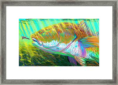 The Perfect Fly For The Perfect Moment  Framed Print