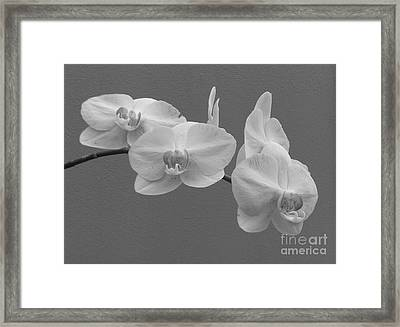The Perfect Orchid Framed Print