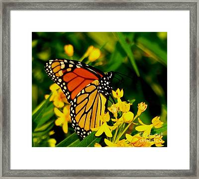 The Perfect Pose Framed Print