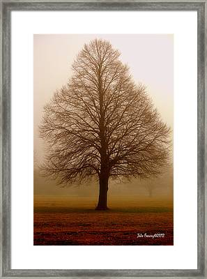 The Perfect Tree Framed Print