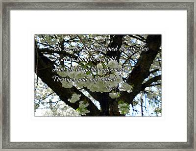 The Perfumed Cherry Tree 2 Framed Print