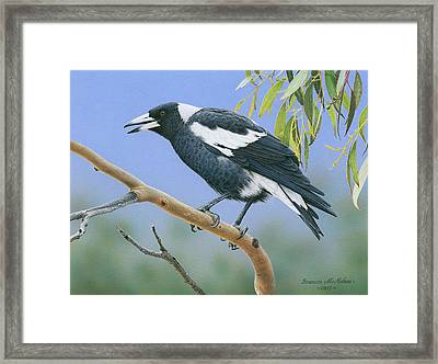 The Pied Piper - Australian Magpie Framed Print
