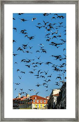 The Pigeons  Framed Print by Georgina Noronha
