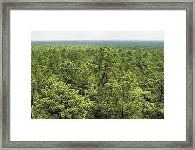 The Pinelands Framed Print by Dawn J Benko