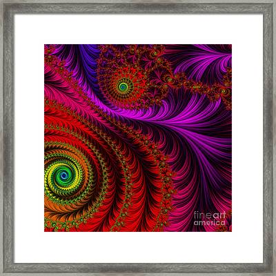 The Pink Feathers Framed Print by Mary Machare