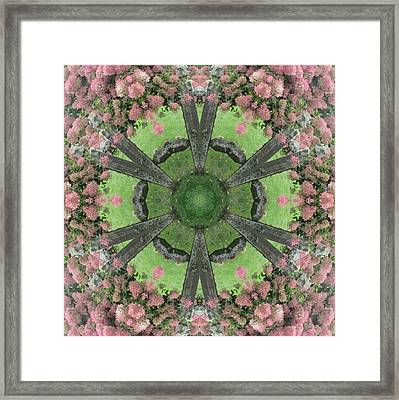 The Pink Hydrangea Framed Print