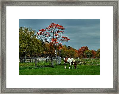 The Pinto Framed Print