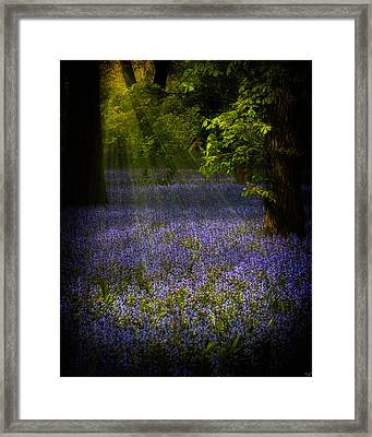 Framed Print featuring the photograph The Pixie's Bluebell Patch by Chris Lord
