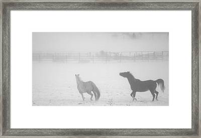 The Play Of Horses Framed Print