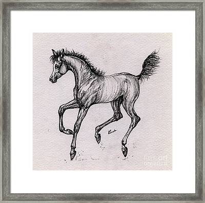 The Playful Foal Framed Print