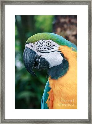 The Poetry Of Nature Framed Print by Sharon Mau