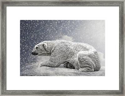 The Polar Bear Framed Print by Joachim G Pinkawa
