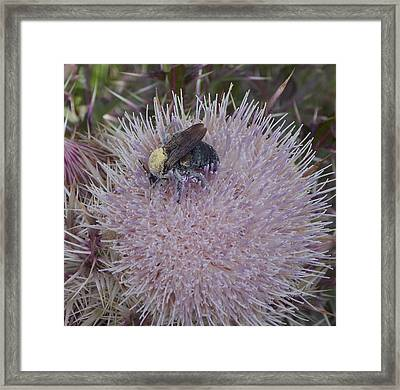 Framed Print featuring the photograph The Pollen Count Is High Today by John Glass
