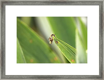 The Pollenator Framed Print