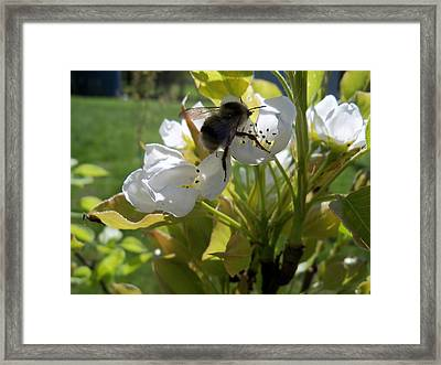 The Pollenator Framed Print