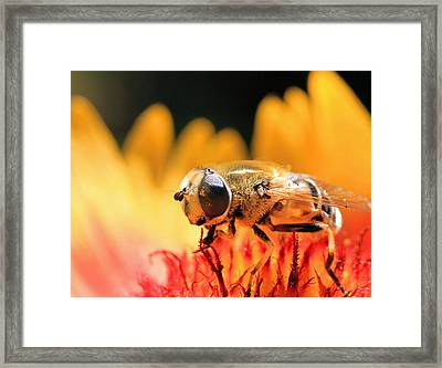 The Pollinator Framed Print by Donna Kennedy