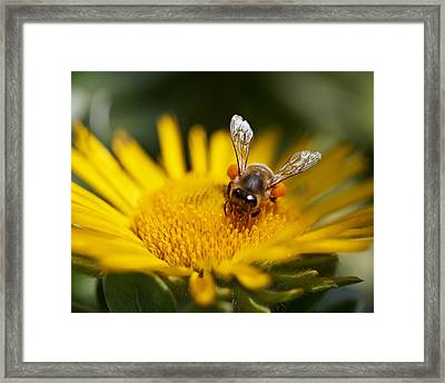 The Pollinator Framed Print by Rona Black