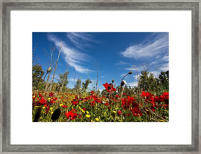 The Poppies Field Framed Print