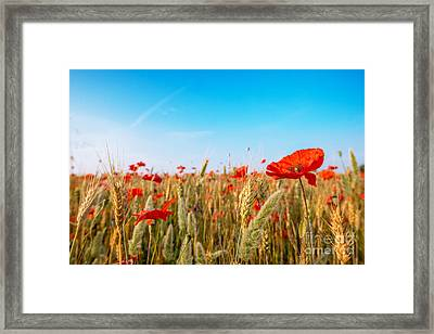 Summer Poetry Framed Print by Hannes Cmarits