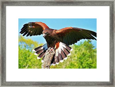 The Pose Framed Print