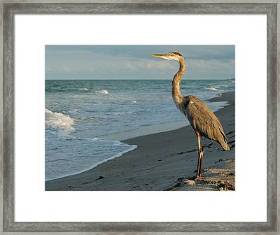 Framed Print featuring the photograph The Poser by Paul Noble