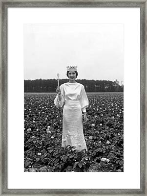 The Potato Blossom Queen Framed Print by Underwood Archives